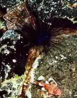 Highlight for album: Diving Gomera