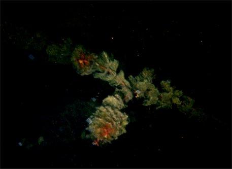 closeup on underwater plant